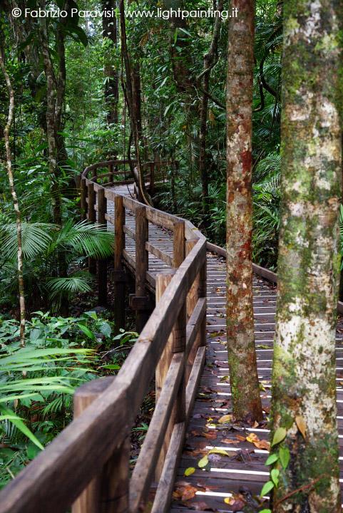 La foresta pluviale di daintree e cape tribulation - Gli animali della foresta pluviale di daintree ...